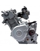 Olio Motore 4T